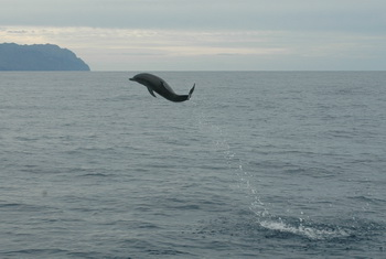 [Photos Dauphins] Sauts les plus impressionnants - Page 2 Dolphin%20jumping